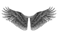 free vector HandDrawn Wings