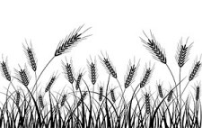 free vector Wheat silhouette vector
