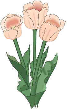 free vector Tulip Flower 9