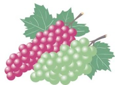 free vector Grapes 7