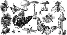 free vector Insects and mushroom free vectors