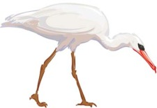 free vector White egret vector 1
