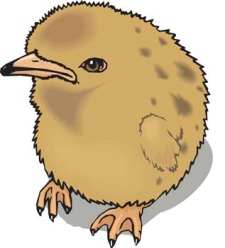 free vector Little Chicken vector 4
