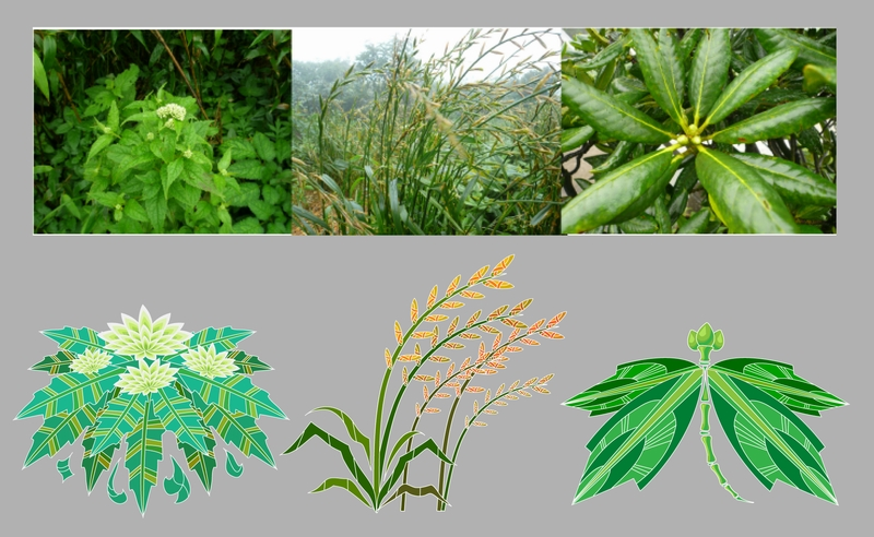 free vector 1 chinese medicinal plants