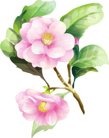 7 elegant watercolor flowers vector Free Vector / 4Vector