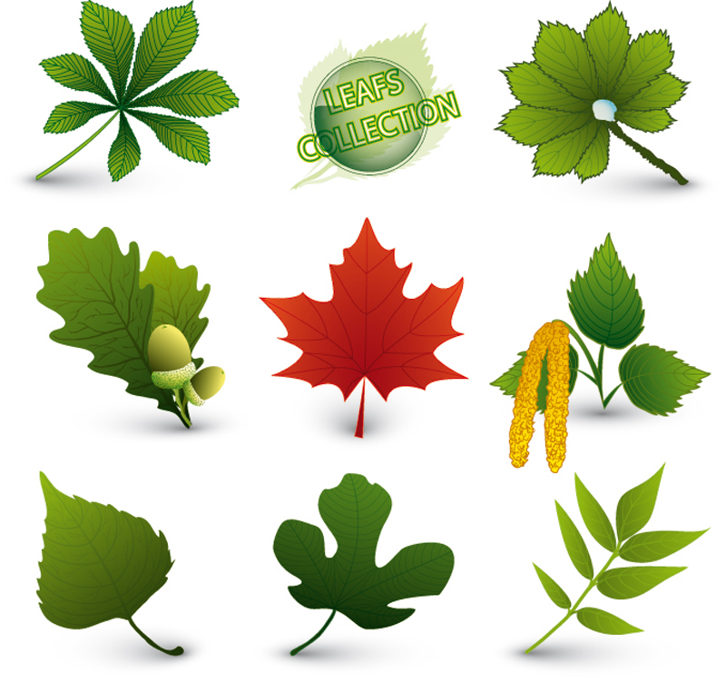 free vector A variety of leaf forms 05 vector