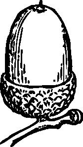 free vector Acorn clip art