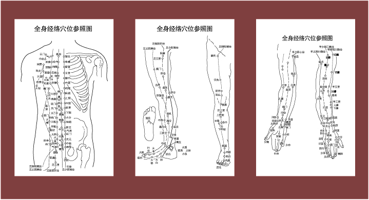 free vector Acupuncture meridian points with reference to the body map