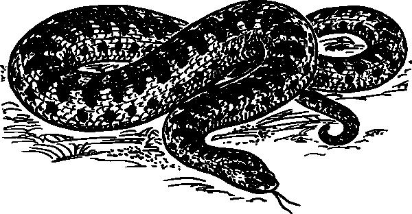 free vector Adder clip art
