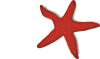 free vector Addon Red Starfish clip art