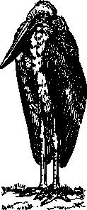 free vector Adjutant clip art