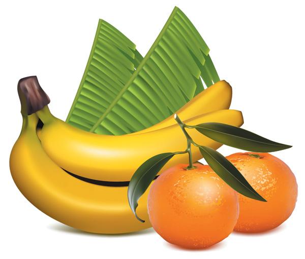 free vector Ai drawing lifelike fruits vector