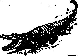 free vector Alligator clip art