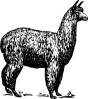 free vector Alpaca clip art