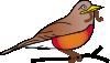 free vector Amercan Robin clip art