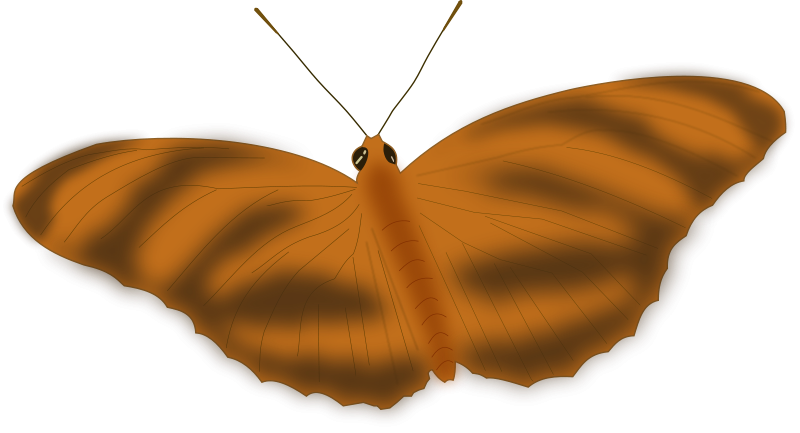 free vector An Ethereal Butterfly
