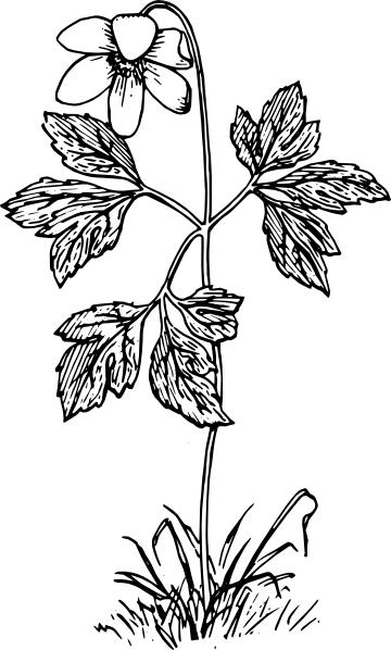 free vector Anemone clip art