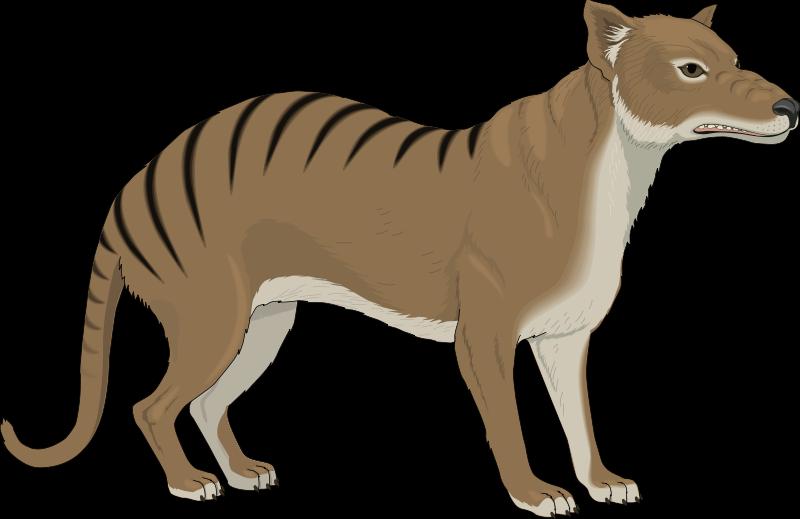 free vector Animal 12