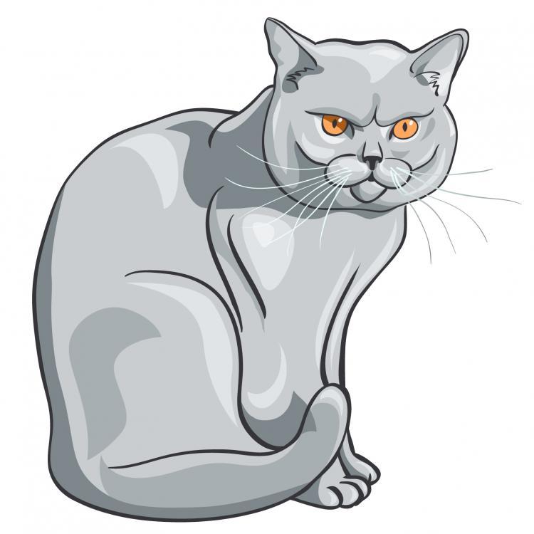 free vector Animal cats 01 vector