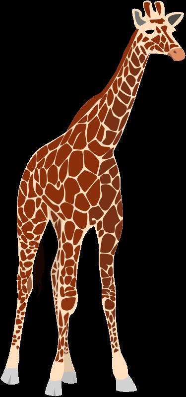 free vector Another giraffe