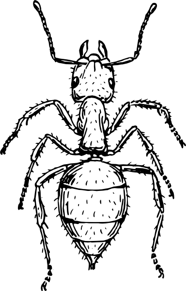 free vector Ant clip art