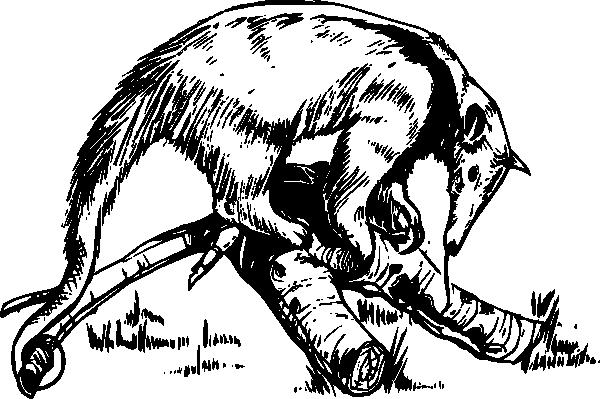 free vector Anteater clip art
