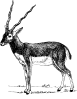 free vector Antelope clip art