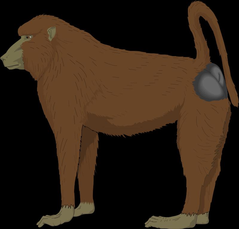 free vector Ape 1