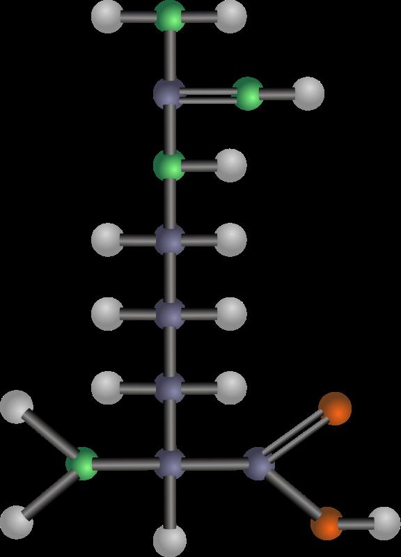 free vector Arginine (amino acid)