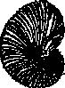 free vector Argonaut Shell clip art