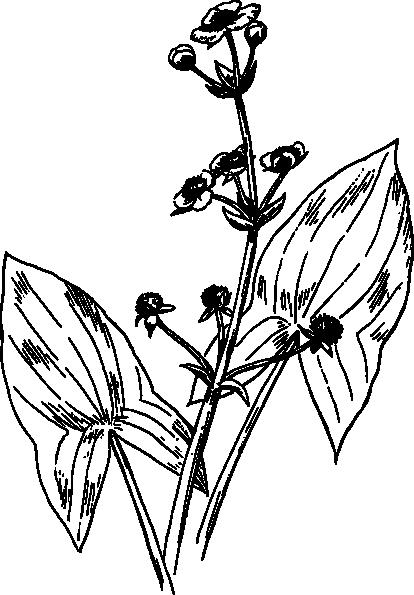 free vector Arrowhead clip art