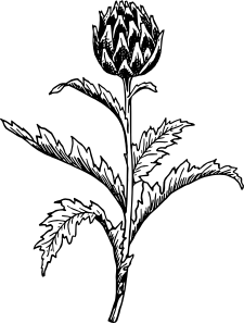 free vector Artichoke clip art 114678