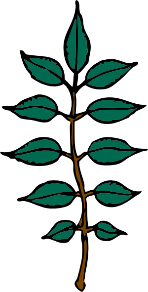 free vector Ash Leaves clip art