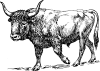 free vector Aurochs clip art 128427
