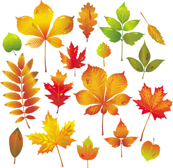 free vector Autumn leaves vector 4355