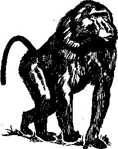 free vector Baboon clip art