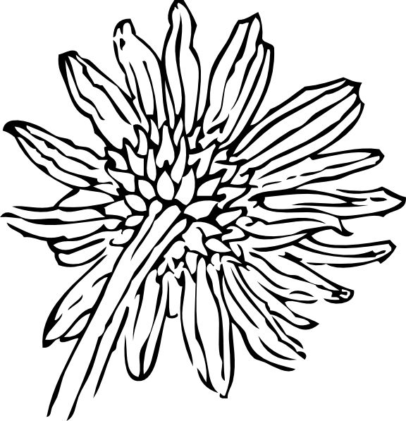 free vector Back Of A Sunflower clip art