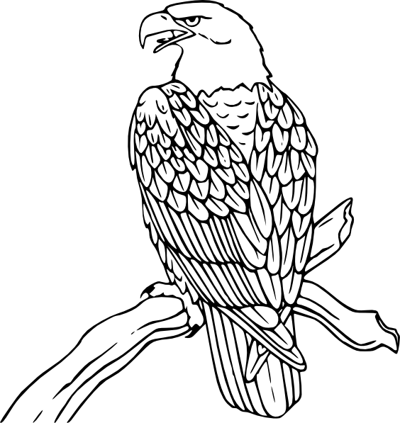 free vector Bald Eagle clip art