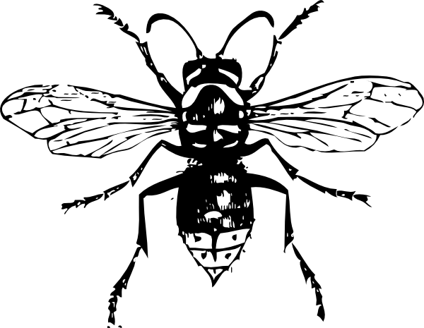 free vector Bald Faced Hornet clip art