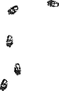 free vector Bear Prints clip art