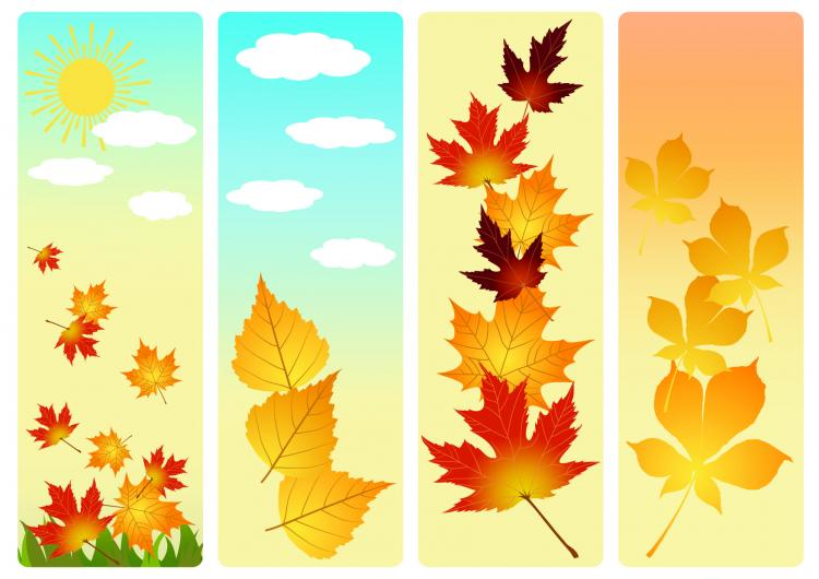 free vector Beautiful autumn leaves vector