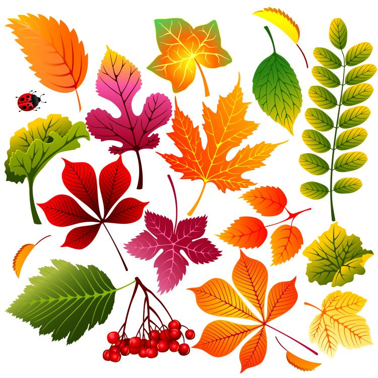 beautiful autumn leaves vector free vector 4vector