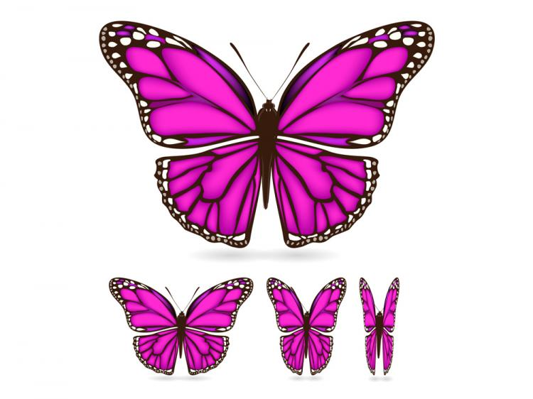 free vector Beautiful butterfly 02 vector