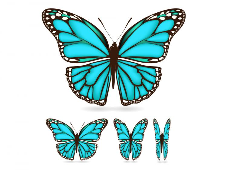 free vector Beautiful butterfly 03 vector