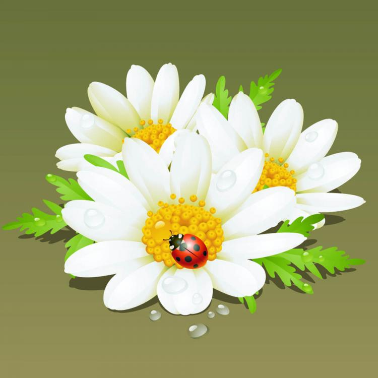 free vector Beautiful flowers background 04 vector