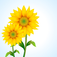 free vector Beautiful sunflower vector