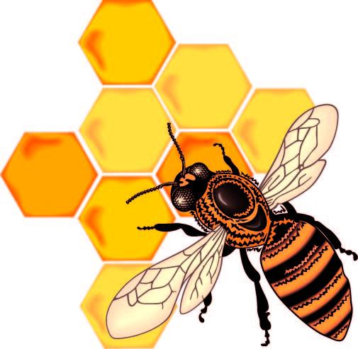 free clipart of honey - photo #23
