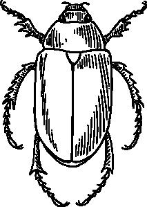 free vector Beetle clip art