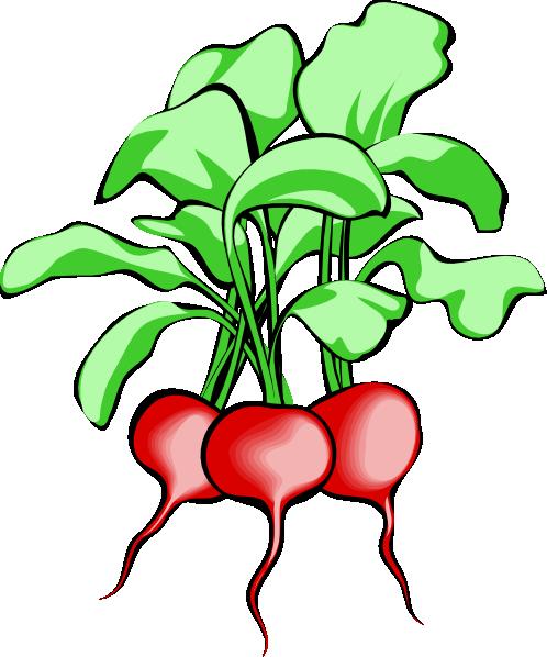 free vector Beets clip art