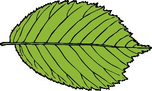 free vector Bi Serrate Leaf clip art